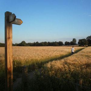 A Summer's evening stroll through the crop fields following a 'Footpaths Around Rixton' walking guide.