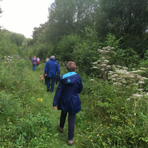 Claypits enjoyed by 25 walkers and 3 well behaved dogs on leads - 2nd August 2017.