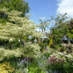 Early June is a lovely time of year to visit gardens open to the public - 2014.