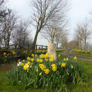 March or April are the best months to do the 'Daffodil Walk' to see the Spring bulbs in all their glory.