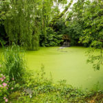 Stunning green pond gives a calming view - 2014.
