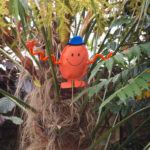 Mr Tickle looking at home in a tree fern - 2018.