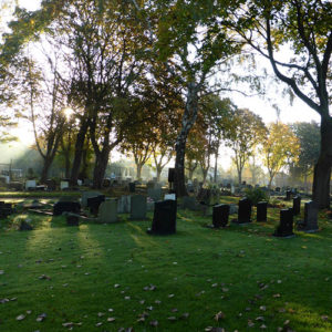 Autumn sun gently streams through the cemetery.
