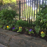 Front wall planted up for the Summer thanks to volunteers and plants donated by local farmers Eddie and James Atherton.
