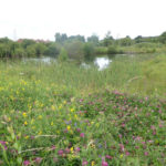 Just one of the Claypits meadows and ponds.