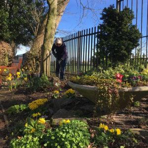 Volunteer tends one of the flower borders Spring 2017.