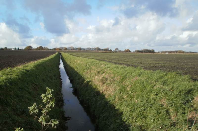 Drainage ditch on Rixton Moss.