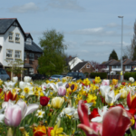 Spring bulbs adorn the approach to Hollins Green - April 2016