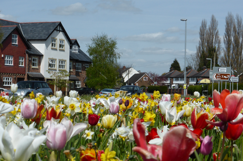Spring bulbs adorn the approach to Hollins Green April 2016.