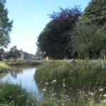 The Village Pond, in the heart of Hollins Green, attracts ducks as well as many visitors.