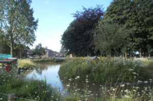 The Village Pond, in the heart of Hollins Green, attracts ducks as well as many visitors
