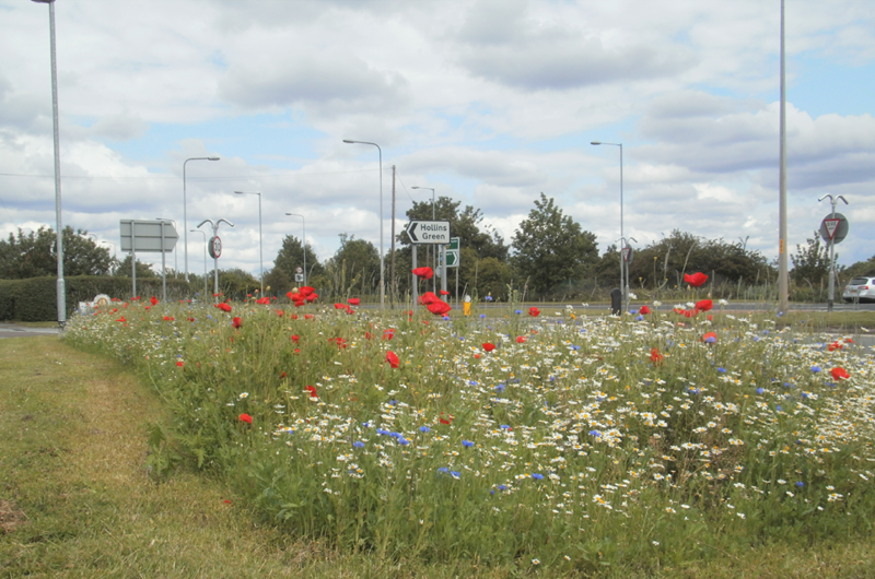 Wildflowers brighten the approach to Hollins Green during the summer months.